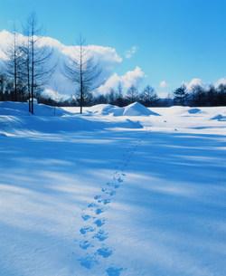 雪景色の写真素材 [FYI03925437]
