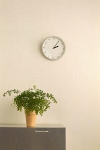 時計と観葉植物の写真素材 [FYI03925967]