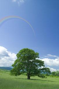 木と虹の写真素材 [FYI03926053]