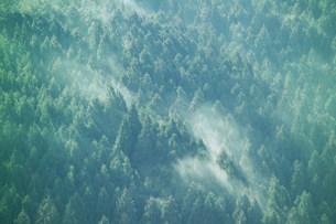 スギ花粉の写真素材 [FYI03926080]