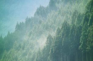 スギ花粉の写真素材 [FYI03926082]