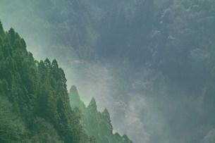 スギ花粉の写真素材 [FYI03926085]