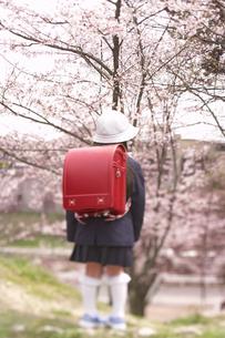 桜と小学生の後姿の写真素材 [FYI03927291]
