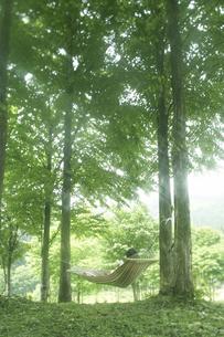 新緑林とハンモッグの写真素材 [FYI03927303]