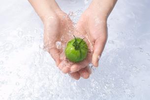 トマトを洗う手の写真素材 [FYI03927331]