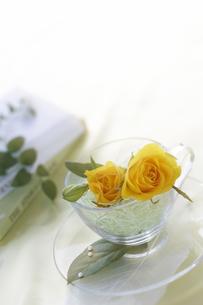 黄色いバラのイメージの写真素材 [FYI03927378]