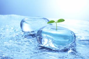 若葉と流水とガラスのオブジェのイラスト素材 [FYI03927512]