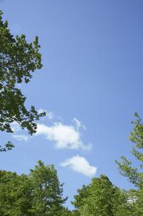 新緑のブナと青空の写真素材 [FYI03927549]