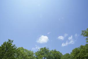 新緑のブナと青空の写真素材 [FYI03927557]