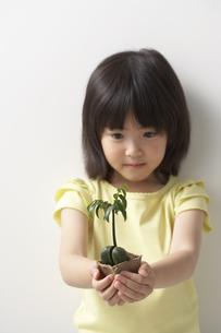 女の子の手のひらの新芽の写真素材 [FYI03927618]