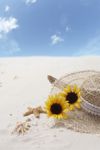 砂浜に流木と貝殻とヒマワリと帽子の写真素材 [FYI03927836]