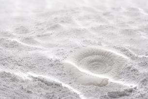 海底イメージ 砂に貝の写真素材 [FYI03927839]