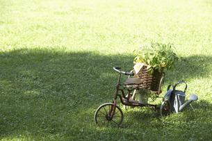 芝生の上のプランター台と植木鉢の写真素材 [FYI03928165]