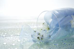 デルファニウムとリボンとグラスの写真素材 [FYI03928191]