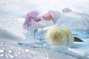 バラとスイトピーとガラス瓶の写真素材 [FYI03928233]