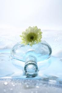スプレイマムとガラス瓶の写真素材 [FYI03928235]