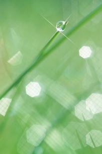 朝露に輝く新緑の草の写真素材 [FYI03929108]