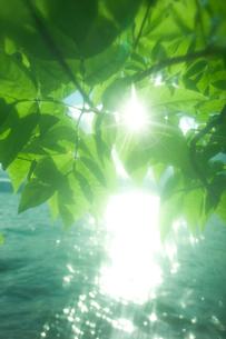 輝く湖と新緑の写真素材 [FYI03929113]