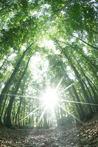 林と輝く太陽の写真素材 [FYI03929135]