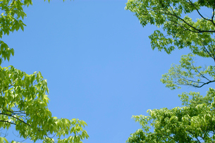 青空を囲む新緑の木々の写真素材 [FYI03929158]