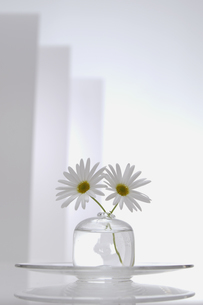 ガラスの花器に生けた花とカップの写真素材 [FYI03929270]