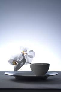 カップに飾った胡蝶蘭の写真素材 [FYI03929296]