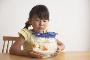 水槽の金魚を覗き込む女の子の写真素材 [FYI03929397]