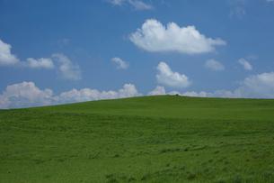 緑の丘と青空の写真素材 [FYI03929467]