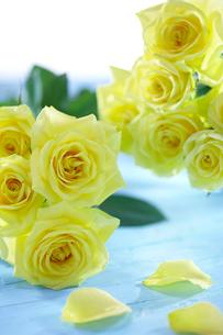 黄色いバラの花束と花びらの写真素材 [FYI03929525]