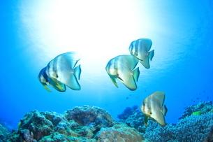 ココポ,海中風景の写真素材 [FYI03929570]