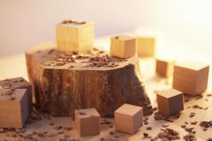 切り株と木工の写真素材 [FYI03929765]
