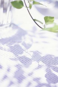植物の影の写真素材 [FYI03929766]