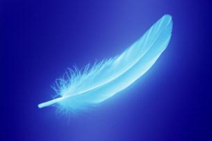 羽毛の写真素材 [FYI03929784]