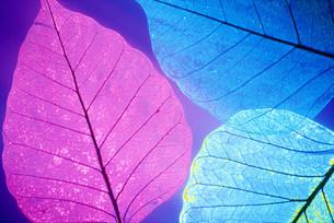 葉のイメージの写真素材 [FYI03929786]