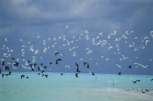 ビーチを飛ぶアジサシの群れの写真素材 [FYI03929923]