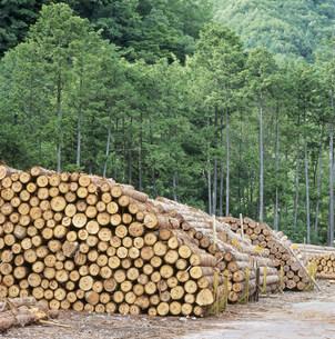 木曽檜 焼笹貯木場の写真素材 [FYI03930060]