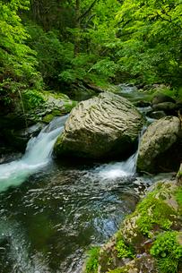 叺谷(かますだに)の渓流 長良川の源流 の写真素材 [FYI03930182]