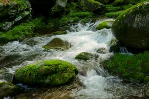 叺谷(かますだに)の渓流 長良川の源流 の写真素材 [FYI03930183]