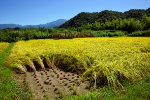 秋の田 恵那山(中央左)を望むの写真素材 [FYI03930234]