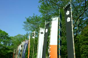 長篠城址 長篠合戦のぼり祭り・紋入り幟の写真素材 [FYI03930342]
