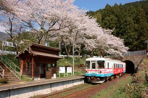 桜咲く日当駅(ひなたえき)樽見鉄道の写真素材 [FYI03930355]