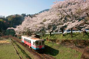 桜咲く日当駅(ひなたえき)樽見鉄道の写真素材 [FYI03930357]