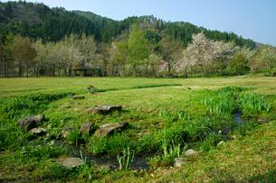 東氏館跡庭園 (トウシヤカタアトテイエン)の写真素材 [FYI03930361]