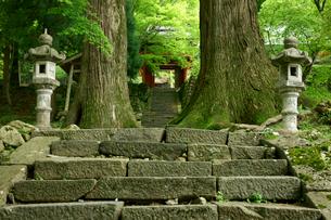 真福院 参道の石段と大杉の写真素材 [FYI03930438]