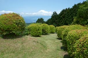山中城址  西ノ丸・見張台と富士山の写真素材 [FYI03930458]