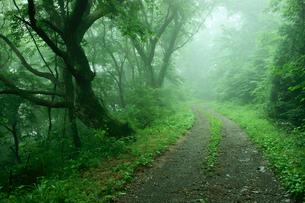 中山道 鳥居峠(車道)・頂上付近の栃の木群の写真素材 [FYI03930517]