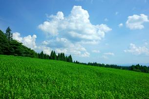 牧草地と夏雲 ひるがの高原の写真素材 [FYI03930519]