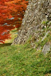 郡上八幡城 腰曲輪石垣と紅葉の写真素材 [FYI03930537]