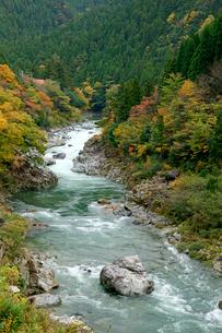 紅葉の板取川の写真素材 [FYI03930548]