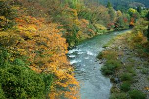 紅葉の板取川の写真素材 [FYI03930549]